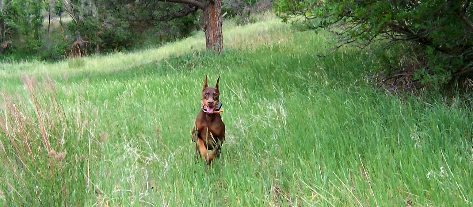 Blaze running @ 9years old & always smiling