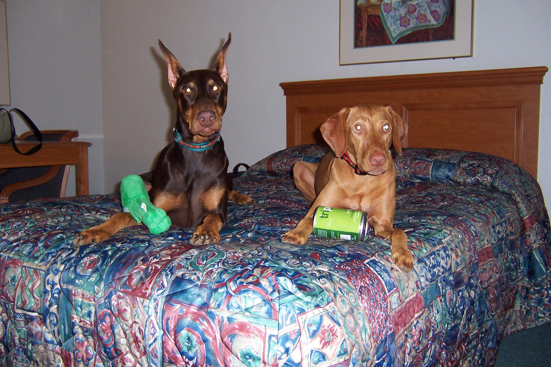 Coco & Penny